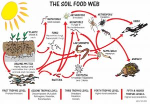 SOIL-FOOD-WEB