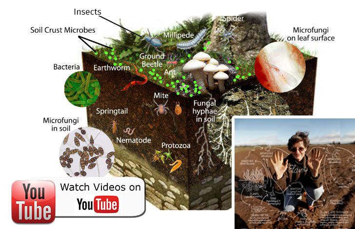 So what is soil health - living soil